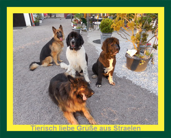 charity-fuer-tiere_indira#4-2